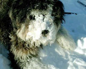 snow nose 2.jpg (159876 bytes)